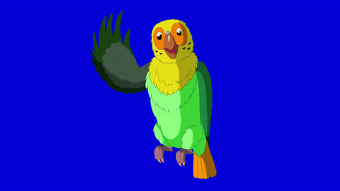 Green parrot greets HD blue screen Animation