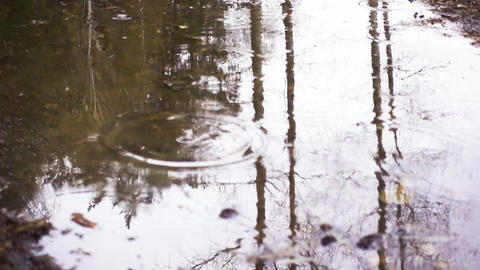 Raindrops In Autumn Puddle Footage