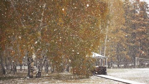 First Autumn Snowfall Footage