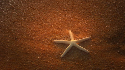 Starfish on Beach with Look Stock Video Footage