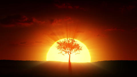 Growing tree at sunrise Animation