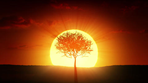 Growing tree at sunrise Stock Video Footage