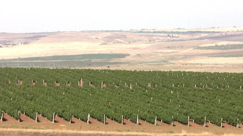 Vineyard. Panorama Stock Video Footage