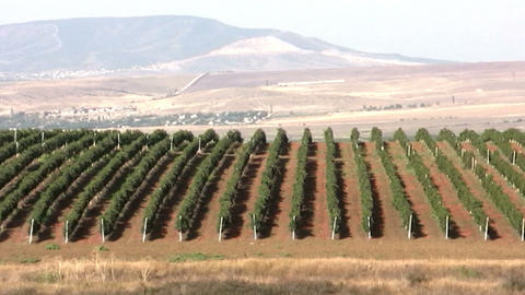 Vineyard. Panorama stock footage
