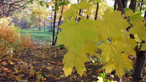 Autumn wood Stock Video Footage