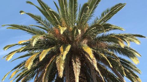 Close up palmtree Stock Video Footage