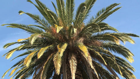 Close up palmtree Stock Video Footage