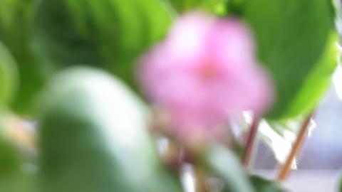 Violets Footage