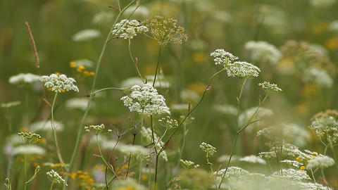 Wild Grass Stock Video Footage