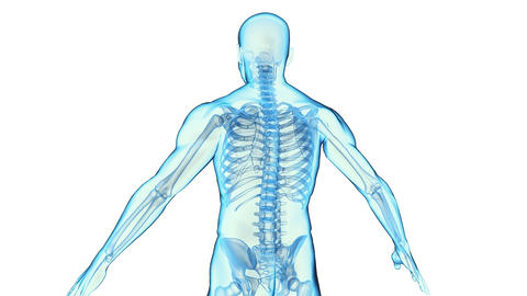 Transparent Human Body Stock Video Footage