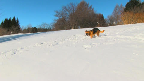 Dog in winter country Stock Video Footage