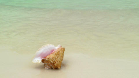 Conch Shell on Cancun Beach Stock Video Footage