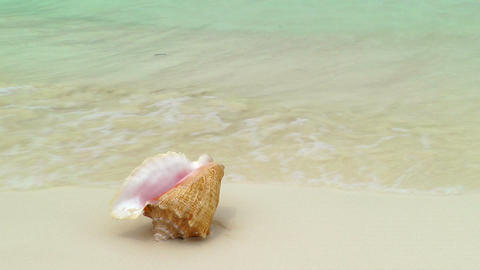 Conch Shell on Cancun Beach Footage