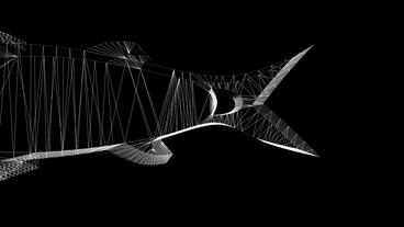 Rotation Of 3D Fish.sea,food,fishing,ocean,water,market,animal,aquatic,cooking,Grid,mesh,sketch, stock footage