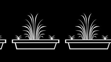 Moving of 3D Bonsai.tree,miniature,plant,asian,gardening,art,garden,oriental Animation