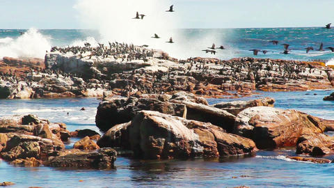 Birds sitting on the rock Stock Video Footage