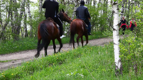 horses Stock Video Footage
