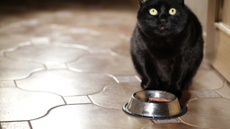 Black cat is eating at home Stock Video Footage