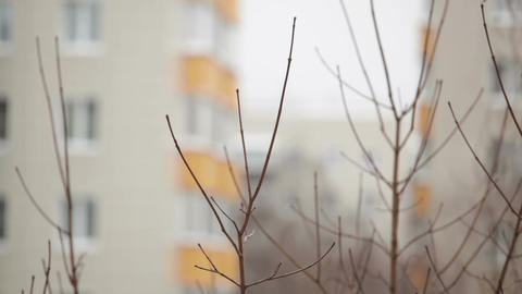 Tree branches and building at the background - view from the window Footage