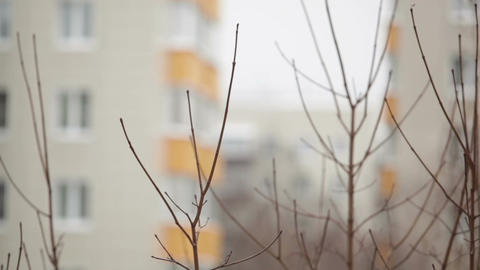 Tree branches and building at the background - view from... Stock Video Footage