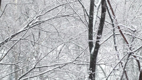 Snowfall and the trees. Wide shot Stock Video Footage
