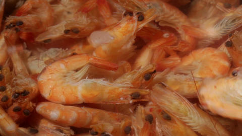 Time lapse. Shrimp are simmered in a saucepan Stock Video Footage