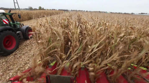 Chopping maize or corn for silage Stock Video Footage