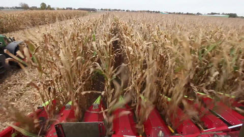 Chopping maize or corn for silage Footage