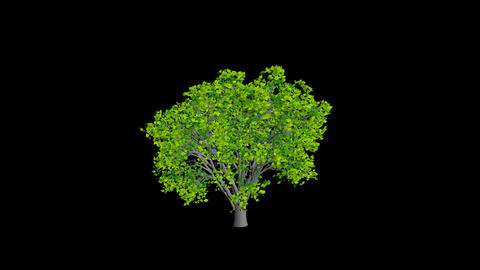 Animation Tree 2 Stock Video Footage