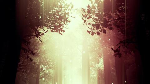 Deep Magic Forest 8 fireflies Stock Video Footage