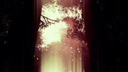 Deep Magic Forest 10 fireflies Stock Video Footage