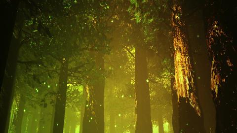 Deep Magic Forest 12 fireflies Stock Video Footage