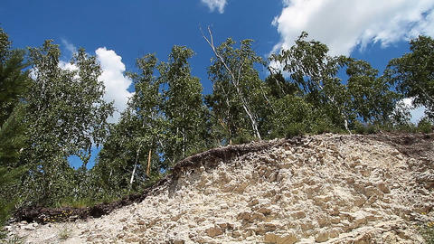 Trees in quarry Stock Video Footage