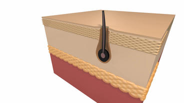 human skin cells & hair follicles Stock Video Footage