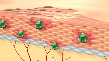 human skin cells & hair follicles structure Stock Video Footage