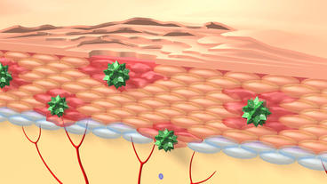 human skin cells & hair follicles structure Animation