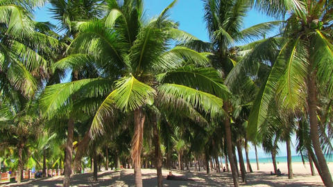 Palm trees blowing in the wind Stock Video Footage