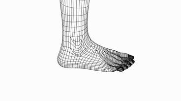 Rotation Of 3D Foot.Leg,health,barefoot,foot,beauty,care,human,female,Grid,mesh,sketch,structure, stock footage