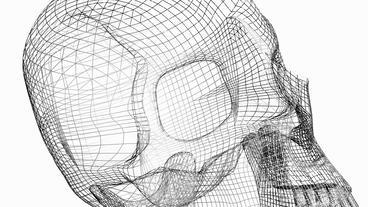 Rotation of 3D Skull.bone,death,skeleton,illustration,design,dead,Grid,mesh,sket Animation