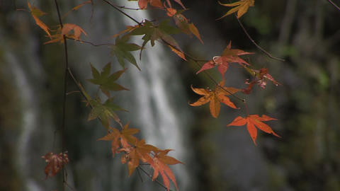Autumn Foliage In Japan stock footage