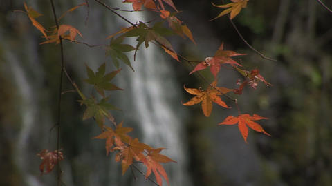 Autumn foliage in Japan Stock Video Footage