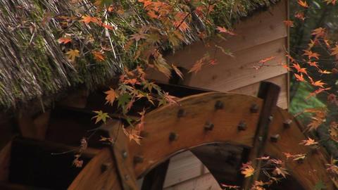 Autumn foliage in Japan Stock Video Footage