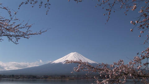 Cherry blossom and Mt. Fuji Stock Video Footage
