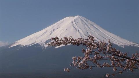Cherry blossom and Mt. Fuji ライブ動画