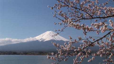Cherry blossom and Mt. Fuji Footage