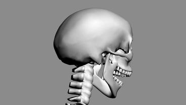 Rotation of 3D skeleton.skull,anatomy,human,medical,body,biology,medicine,scienc Animation
