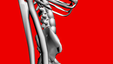 Moving of 3D skeleton.anatomy,human,medical,body,skull,biology,medicine,science, Animation