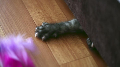 Playful Kitten stock footage