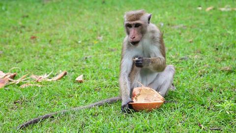 Monkey activity Footage