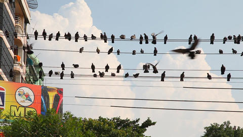 Pigeons on the wires in Yangon, Myanmar Stock Video Footage
